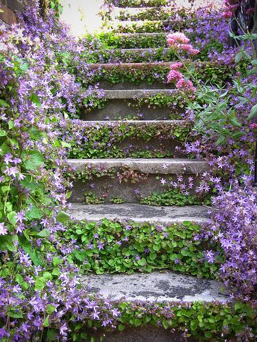 Purple flowers on shady stairs.