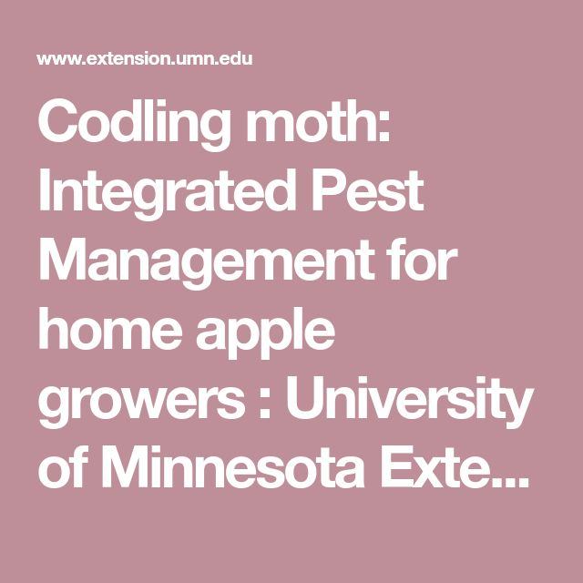 Codling moth: Integrated Pest Management for home apple growers : University of Minnesota Extension