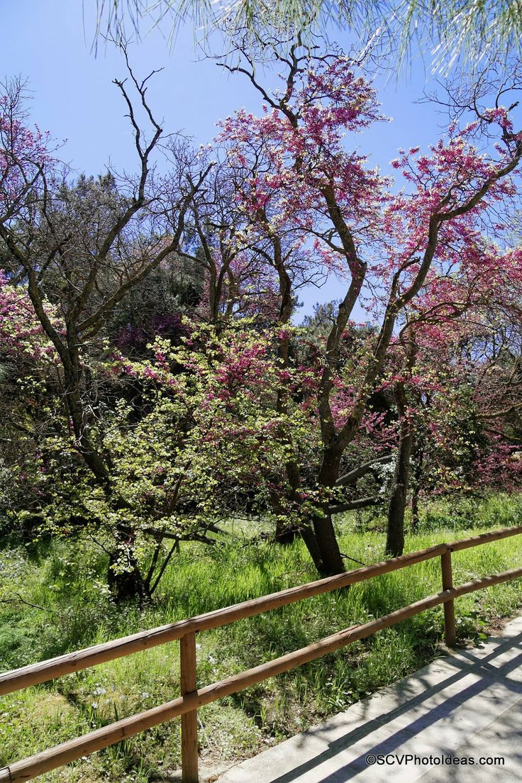 A small album of Spring scenery with Blossoming Almond Trees.