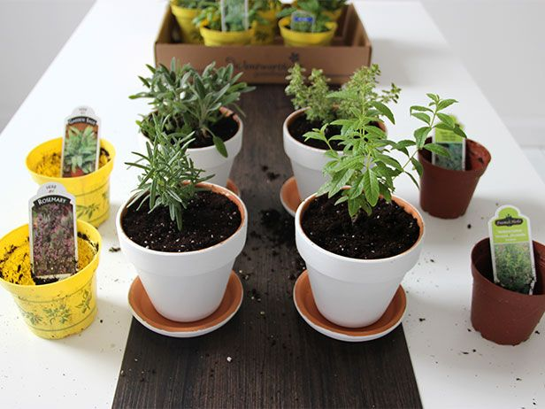 Plant a Pretty Windowsill Herb Garden in White Painted Planters >> http://blog.diynetwork.com/maderemade/how-to/diy-modern-minimalist-white-planters-for-a-windowsill-herb-garden/?soc=pinterestHerbs Garden