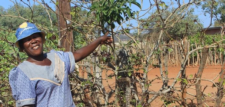 Our wonderful donors are sponsoring rural women as baobab guardians, planting new baobabs to preserve and protect these iconic african trees.