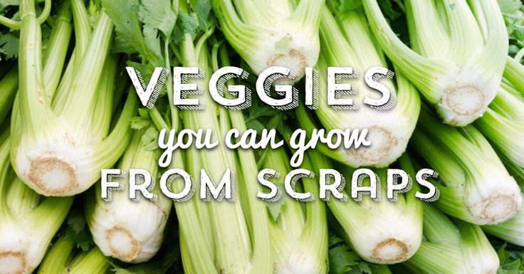 Vegetables you can regrow from scraps.