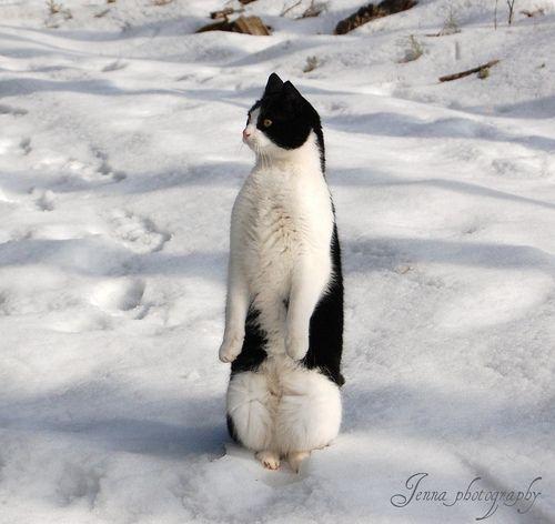 ペンギンの疑いがあるネコ