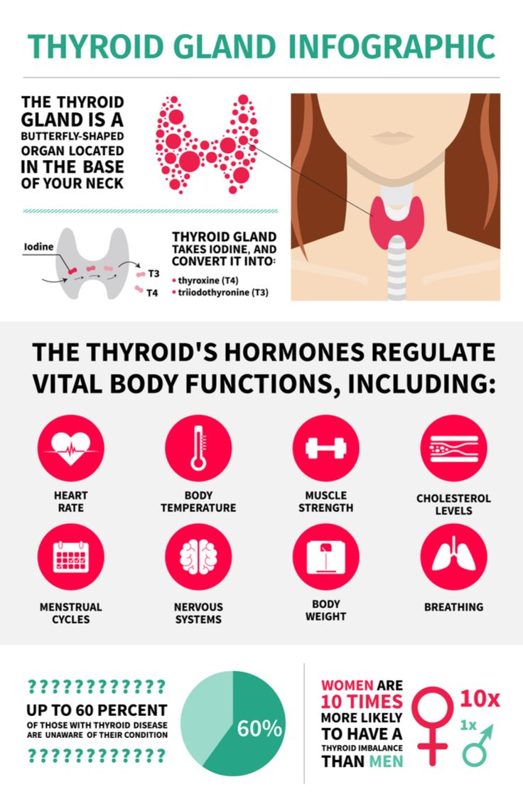 Thyroid Gland Metabolism Terms And Functions Thyroid Gland
