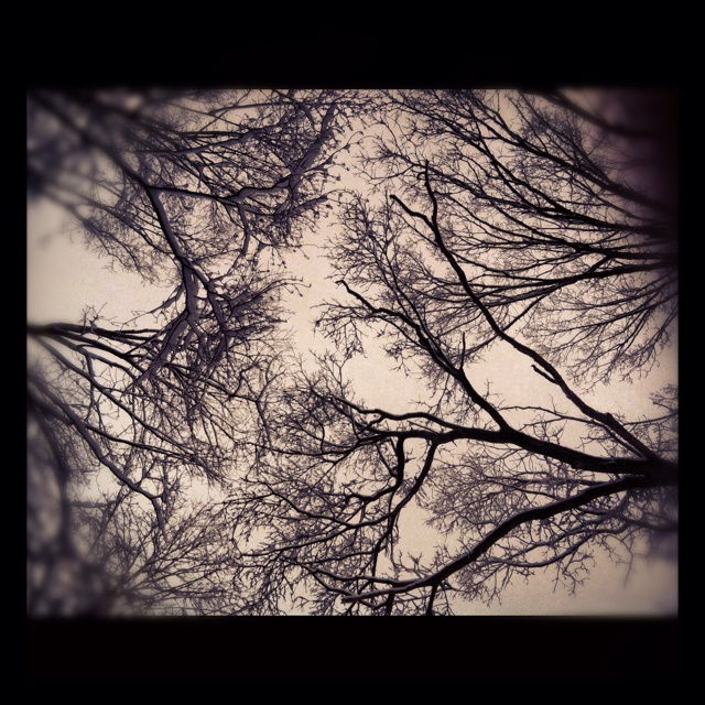 Looking up into branches on a snowy morning; my own photo. (c) Renée LaScala, 2012René Lascala, Snowy Mornings