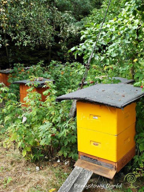 Bee hives; Pomysłowy ogród: Jak wspomagać pszczoły w naszym ogrodzie? To i inne pytania do mistrza pszczelarstwa...