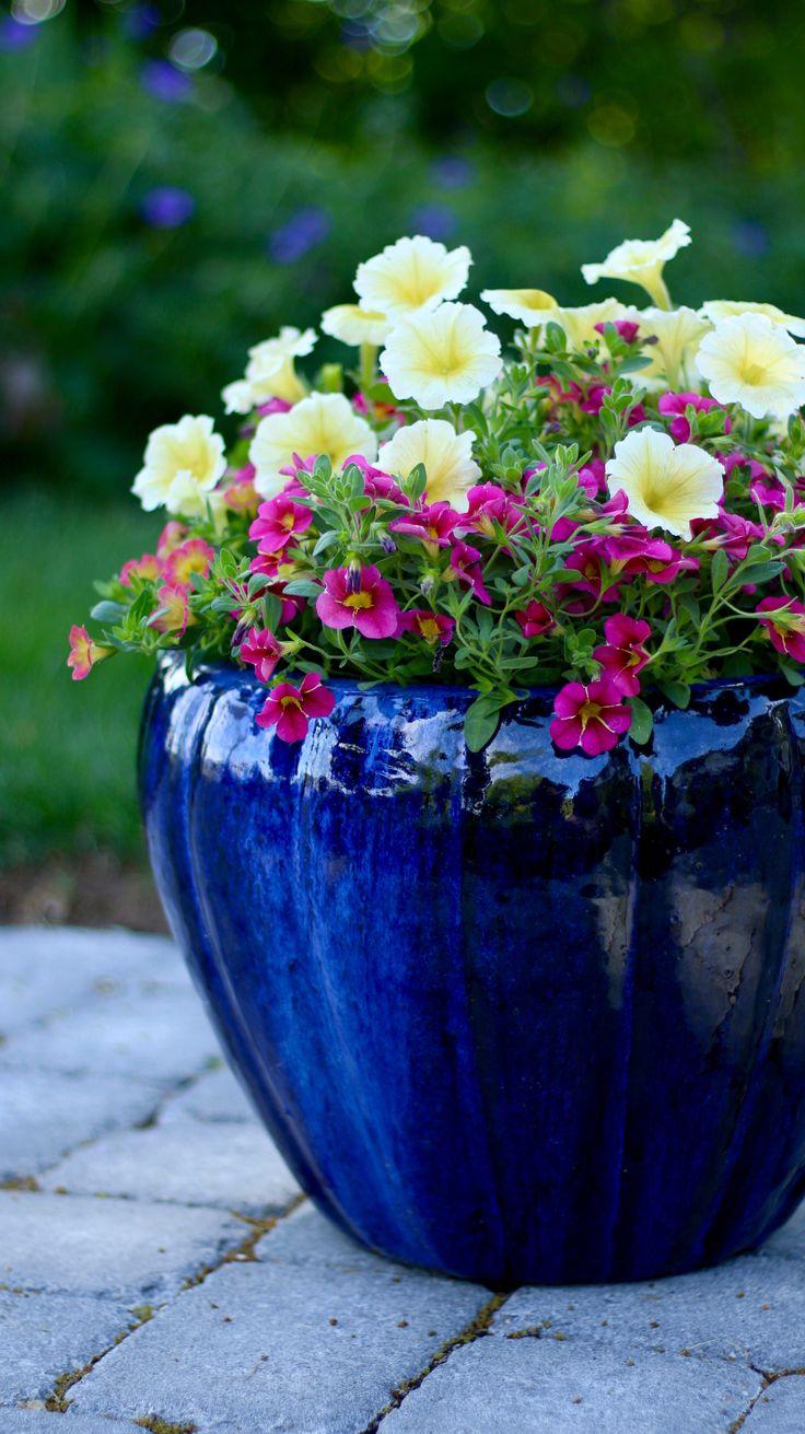 34 best Garden Advice Videos images on Pinterest | Container garden ...