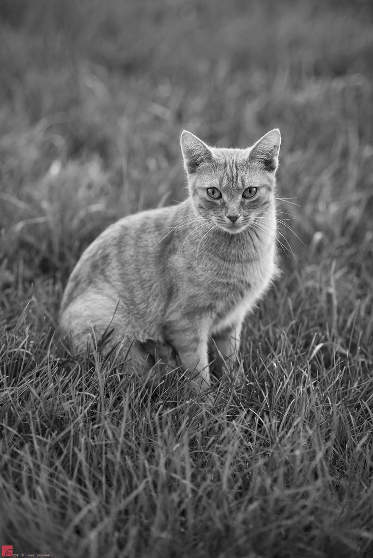 """The Master Cat - Yuriy Skoba, Honey & Queens Inc. Feel free to visit and follow me on  * <a href=""""http://torontointeriors.photography/"""">torontointeriors.photography</a> * <a href=""""https://www.facebook.com/PavelVoronenkoPhotography"""">Facebook</a> * <a href=""""https://www.facebook.com/torontointeriorsphotography"""">T.I.F. on Facebook</a> * <a href=""""https://instagram.com/torontointeriors.photography/"""">Instagram</a> * <a href=""""https://www.pinterest.com/PavelVoronenko/"""">Pinterest</a>"""