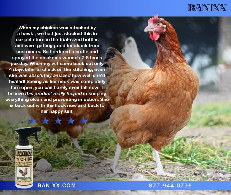 We're so happy to hear the customers of Weber's Pet Supermarket, Foxmill have been benefiting from Banixx! Don't forget to recommend #BanixxforChixx to your favorite #backyardchicken enthusiasts!