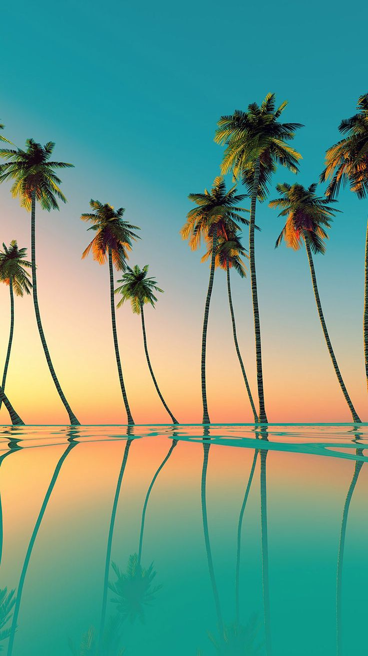 Wallpaper iphone tropical - Shop Coconut Palms Wallpaper In Nature Landscapes Theme