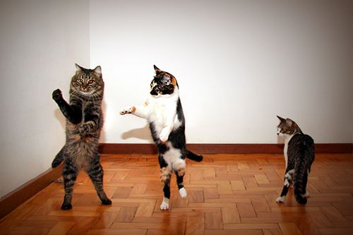 Dancing Cat: Just Dance, Of The, Dance Kitty, Dance Class, Funny Cute Cat, Funniest Animal, Dance Cat, Cute Kittens, Bus Stop