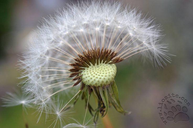 """Chi non conosce canzone e filastrocca? Eccole qui tutte e due con un grazioso filmato: per qualche momento torniamo tutti bambini.  """"Le cose d'ogni giorno raccontano i segreti a chi le sa guardare ed ascoltare Per fare un tavolo ci vuole il legno per fare il legno ci vuole l'albero per fare l'albero ci vuole il seme per fare il seme ci vuole il frutto per fare il frutto ci vuole il fiore ci vuole un fiore ci vuole un fiore Per fare un tavolo ci vuole un fiore [...] #giannirodari…"""