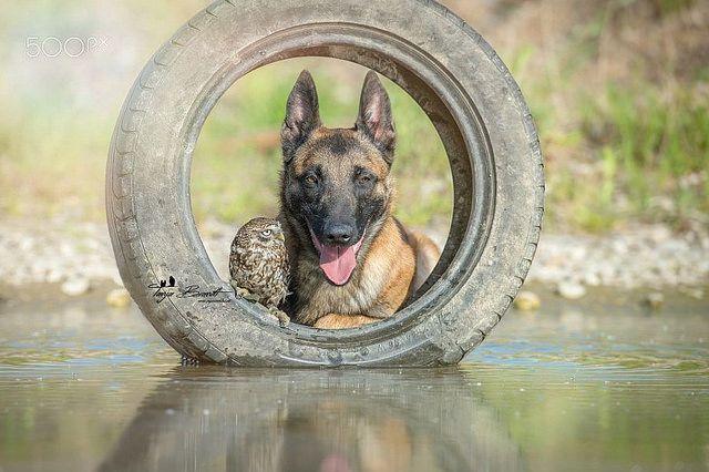A bela amizade entre um cão e uma coruja... de derreter o coração!   Tá Bonito