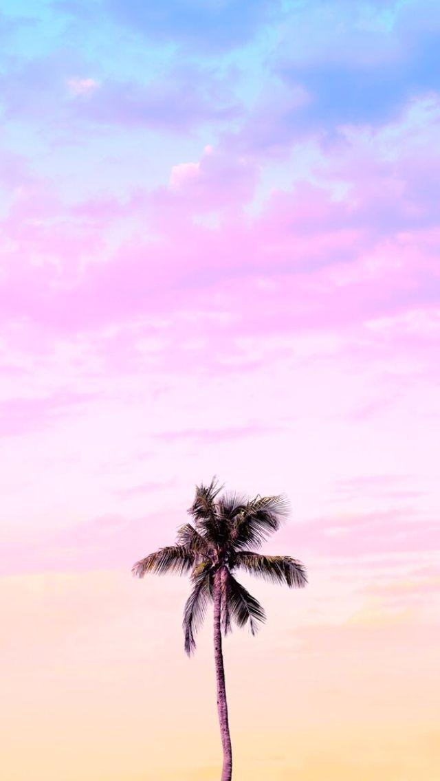 Matt Crump photography iPhone wallpaper Pastel Bermuda palm tree