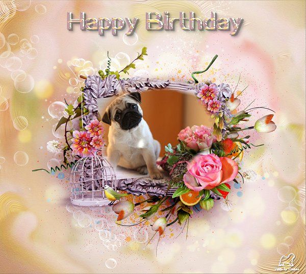 19 best images about PUG BIRTHDAY CARDS – Pug Birthday Cards