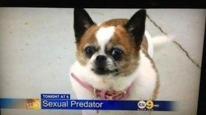 The 15 Most Ridiculously Dumb Local News Stories Ever