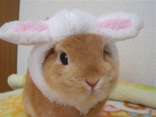 Bunny dressed up as a...bunny!