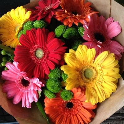 Vibrant colour range of Gerberas and Germinis, with Zantini Chrysanthemums and green Hypericum Berries.  Part of our Mothers Day 2016 Collection.