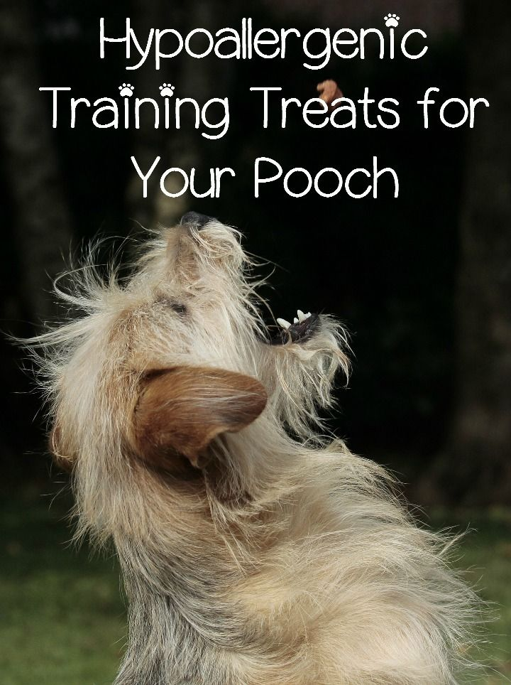 Hypoallergenic Dog Training Treats: Hypoallergenic dog treats are a great way to train a dog with food sensitivities. Hypoallergenic dog treats let you train the dog without allergy flair ups.