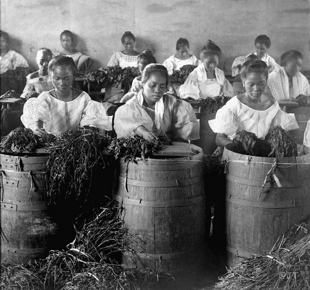 Filipino girls stripping leaves for cigar manufacture. Manila, Philippines, early 20th Century by John T Pilot, via Flickr