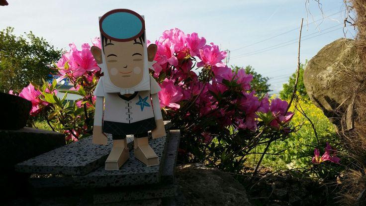 서귀포엔 예쁜꽃들이 너무많이피어있네요^^ 해녀를papertoy로 만들어보았는데 꽃하고 너무잘어울리네요^^
