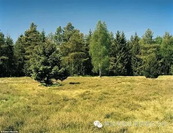 Can you find out the sniper hiding in camouflage?