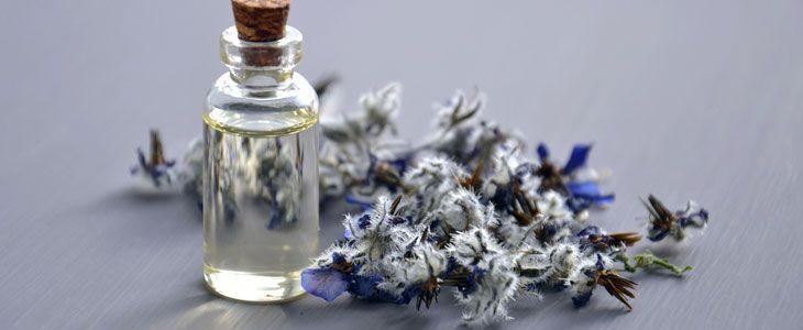 Plantes des parfumeurs : du choix des plantes à l'extraction