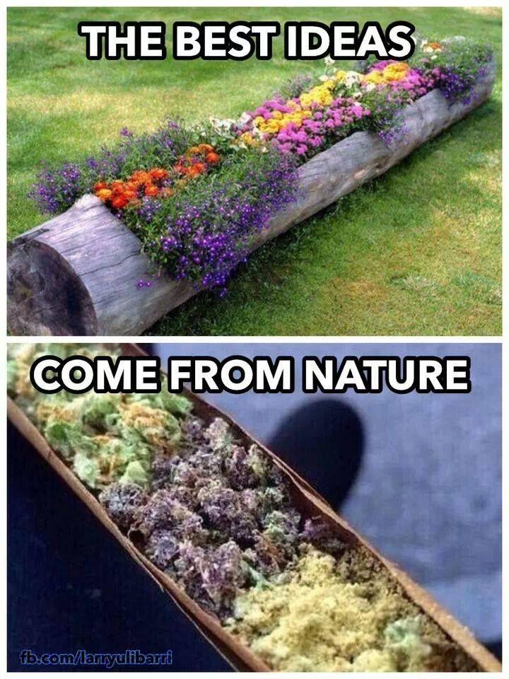 Lyric ganja farmer lyrics : 1810 best Ganja Goodies images on Pinterest | Cannabis, Killing ...