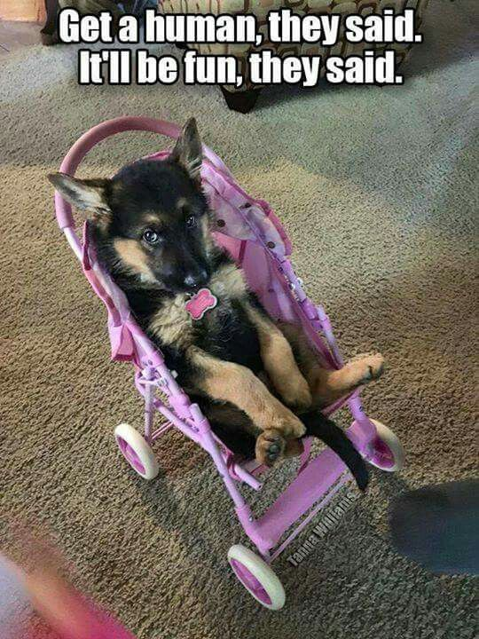 we may have done this to our dog when we were little.....
