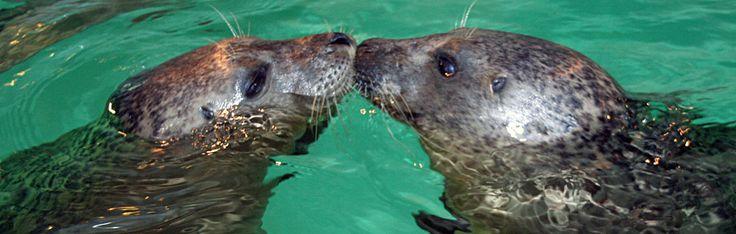 The Maritime Aquarium At Norwalk Inspires People To