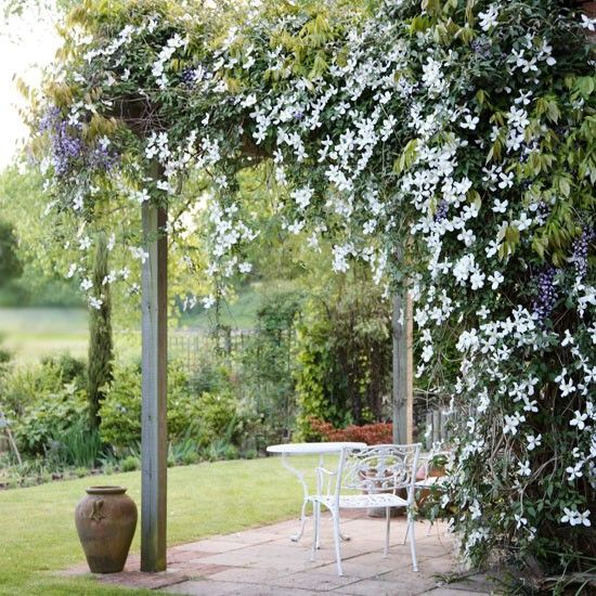 125 Best Images About Clematis On Pinterest Gardens