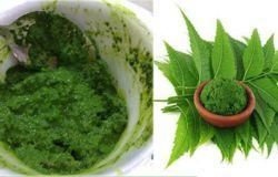 árbol-de-neem-beneficios-salud