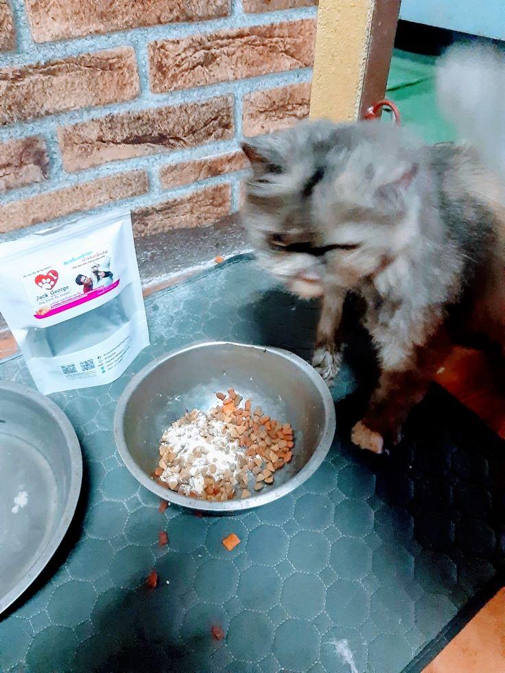 หมา กน อาหาร แมว
