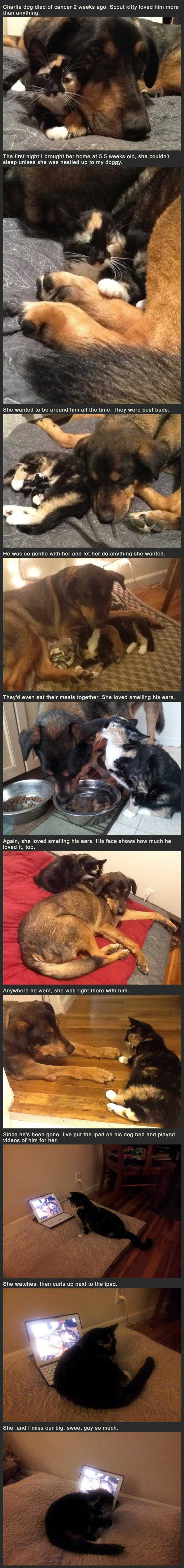 My dog died of cancer 2 weeks ago; my cat misses him. This story is heartbreaking, but it's true love at it's highest. Wow sad an beautiful what a great story animals are truly amazing...