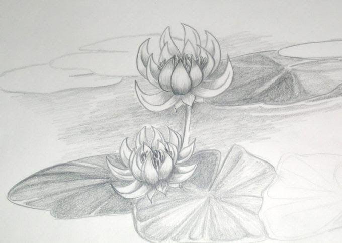 Terkeren 12 Gambar Bunga Mawar Tiga Dimensi 15 Gambar Sketsa Bunga Dari Pensil Yang Mudah Dibuat 3 Cara Untuk Menggambar Bung Di 2020 Sketsa Bunga Teratai Seni Rupa