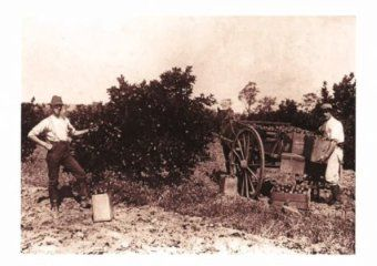 Picking Harvey Fresh Oranges in the 1900's.  http://www.harveyfresh.com.au/pages/Our-Story.html