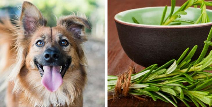 Non solo frutta e legumi fanno bene al vostro cane. Esistono anche delle spezie e delle erbe aromatiche che possono mantenerlo in buona salute.