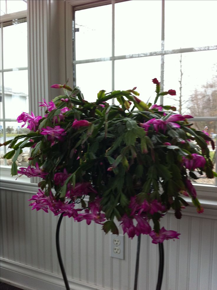 239 Best Images About Indoor Plants On Pinterest