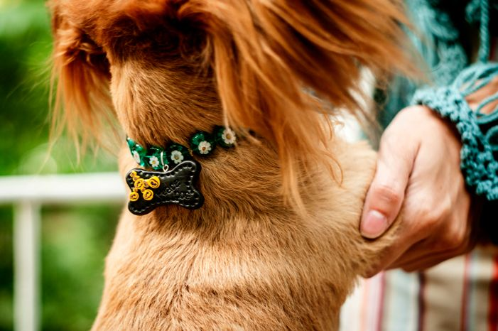 Dog Tag Peace Dog