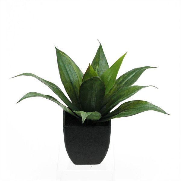 "16"" Artificial Green Agave Succulent in Black Pot ❤ liked on Polyvore featuring home, home decor, floral decor, southwest home decor, southwestern home decor, green home accessories, succulent pots and green home decor"