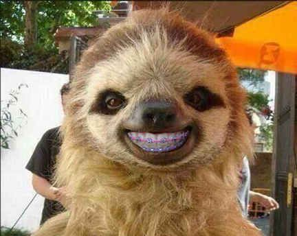 This sloth. | 14 Animals With Braces That Will Make You Smile