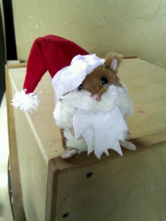 Hamster Santa Costume Home Pinterest Costumes Santa