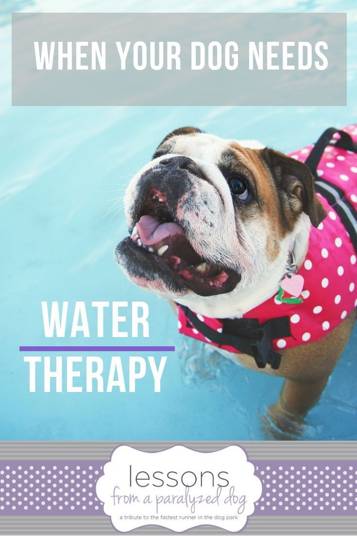 What To Expect When Your Dog Is Enrolled In Canine Water Therapy Paralyzed Dog Dogs Your Dog