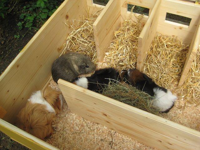 23 besten meerschweinchen gehege bilder auf pinterest. Black Bedroom Furniture Sets. Home Design Ideas