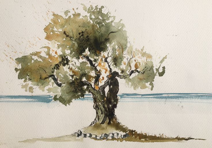 Olive tree. Watercolor, pen.