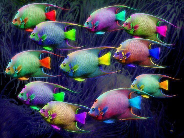 39 b sta bilderna om colorful fish p pinterest for 94 1 the fish