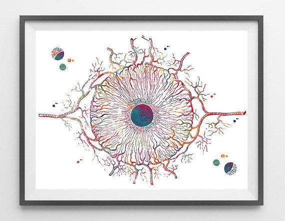 Human Iris Anatomy Art Print Medical Art Ophthalmology