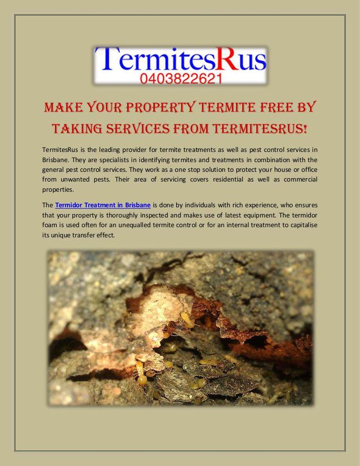 TermitesRus is the leading provider for termite treatments as well as pest control services in Brisbane. They are specialists in identifying termites and treatments in combination with the general pest control services.