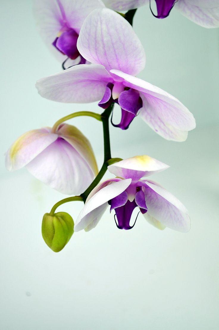Nice Flower Tattoo Ideas For Women: 25+ Best Ideas About Purple Orchids On Pinterest