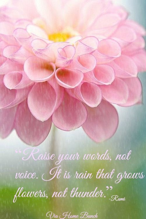 """Quotes. """"Raise your words, not your voice. It is rain that grows flowers, not thunder.""""  #Quotes"""